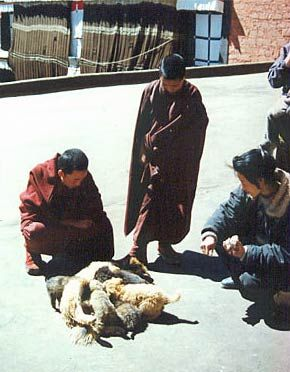 монахи с щенками апсо