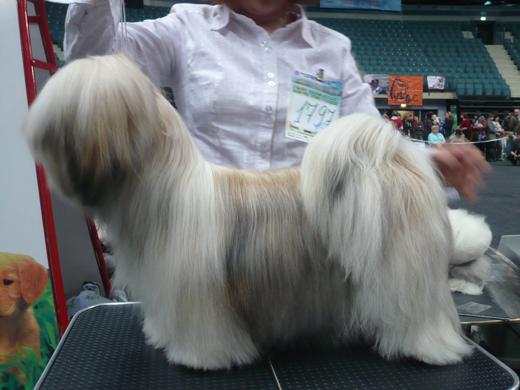 """Международная выставка собак FCI-CACIB """"Гран-при """"Весенний Петербург"""""""
