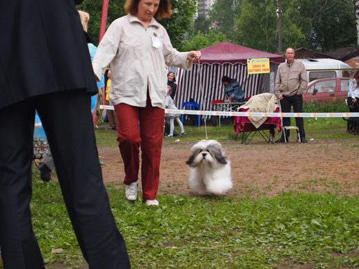 ЛЕТНИЙ КУБОК АСКОНЫ 2011