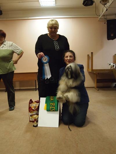 Бест на Лучшую собаку выставки
