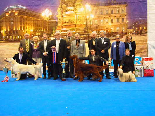 Три лучших собаки выставки