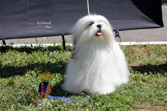 Энжел - Чемпион Украины