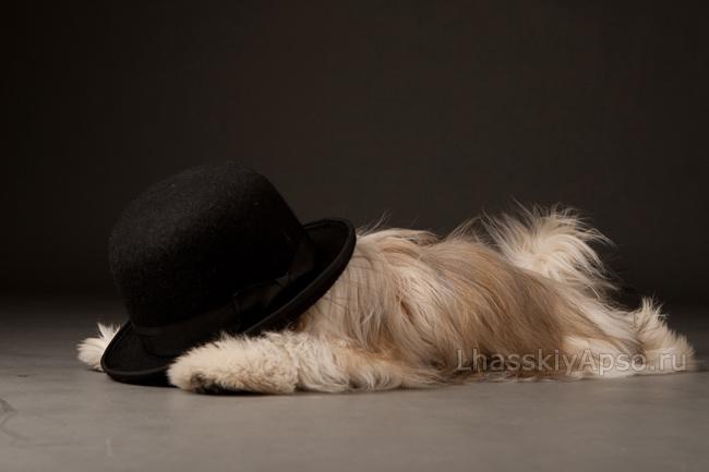 Блюз - Евочка со шляпой