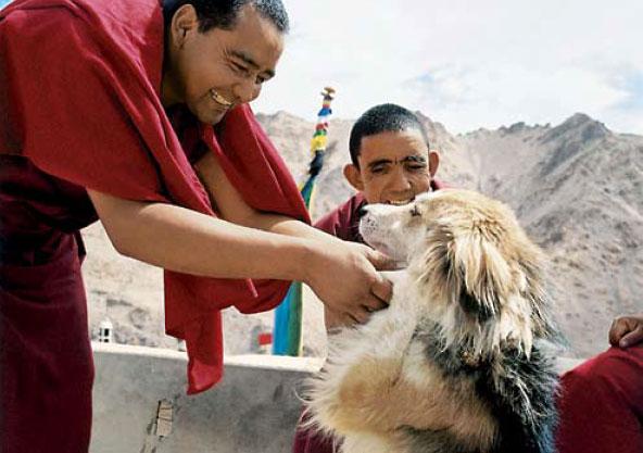 Монахи и собака