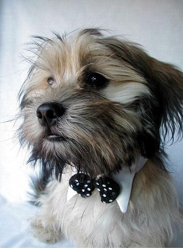Порода собак. Тест